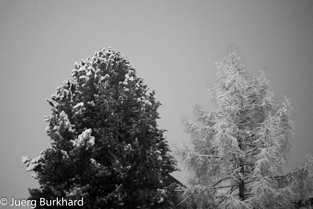 Schwarz-weiss-Bäume