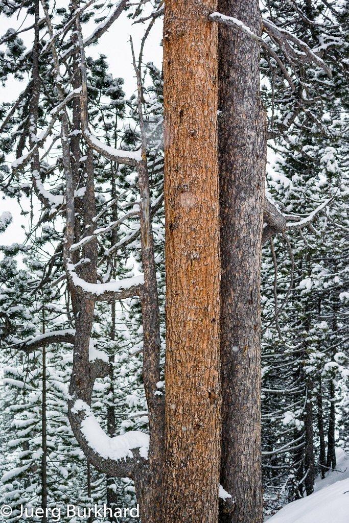 Farb-Bäume
